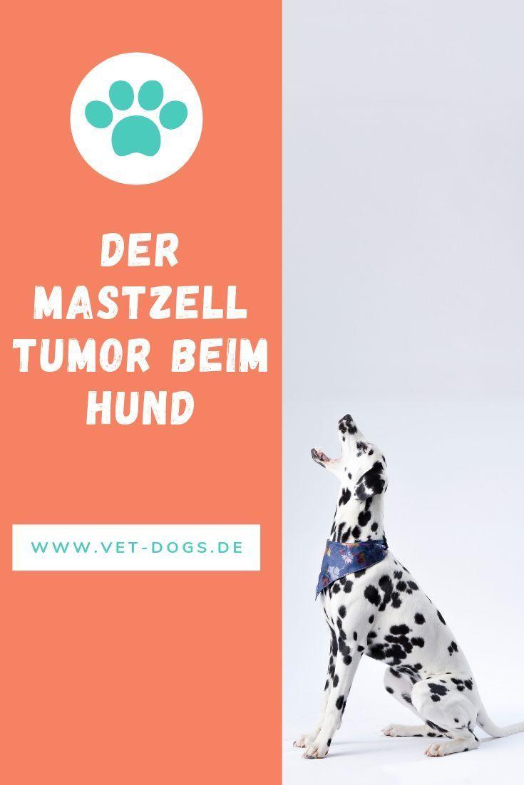 Der Mastzelltumor Beim Hund Gehort Zu Den Haufigsten Hauttumoren Beim Hund Erfahre Die Wichtigsten Fakten Daruber Ve Hunde Ernahrung Hundeernahrung Tierarzt
