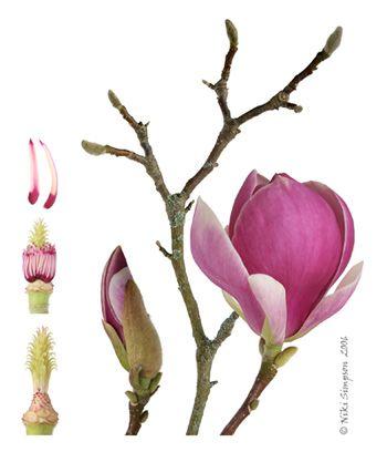 Botanisches Museum Galerieausstellung Botanical Illustration Vintage Flower Drawing Botanical Flowers