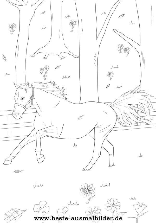 ausmalbild-pferd.jpg (600×857) | ADULT COLORING PAGES | Pinterest ...