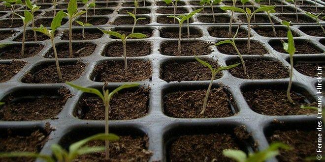 Un petit coup de pouce pour semer des tomates tomates - Comment semer des tomates ...