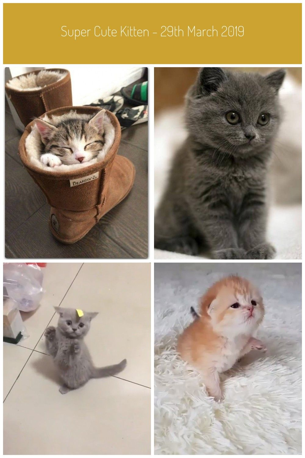 40 So Cute Kittens That Youll Want To Cuddle Them Forever H3rcom Impressive Strange Funny Cute Kittens Kittens Cutest Super Cute Kittens Kittens