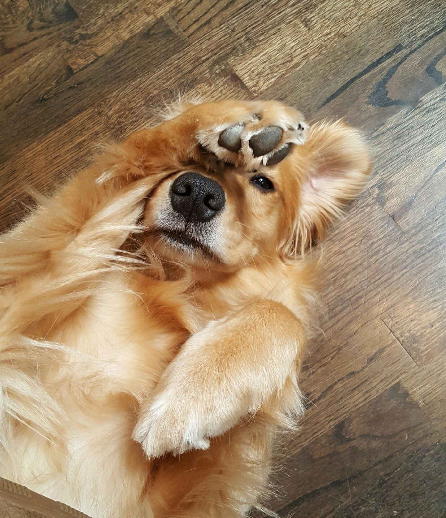 Stop trying to take my photo favorite funny pictures pinterest