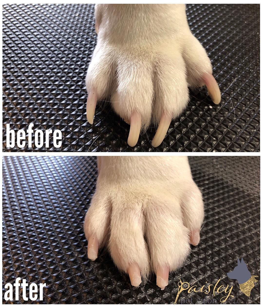 how to trim puppy nails with grinder