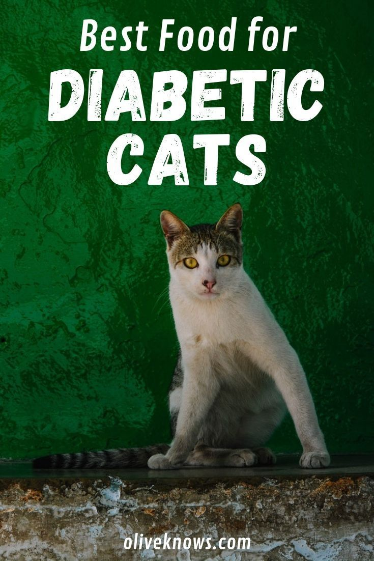 Best Food for Diabetic Cats and Everything Else You Need