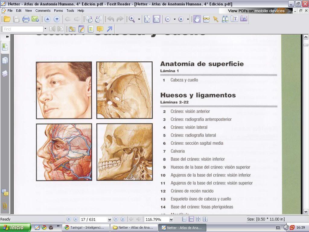 Atlas De Anatomia Humana 4º Edicion [Netter] (Blog para Descargar ...