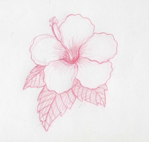 dibujos de flores a lapiz , Buscar con Google