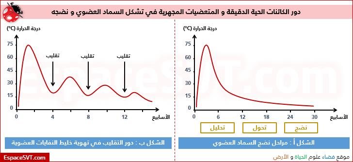 دور الكائنات الحية الدقيقة و المتعضيات المجهرية في تشكل السماد العضوي و نضجه Chart Line Chart