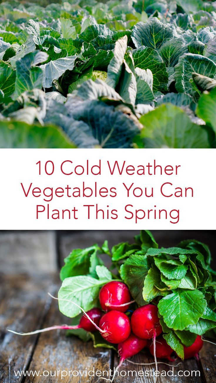 10 Cold Weather Vegetables You Can Plant This Spring 400 x 300