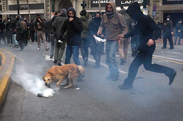 Loukanikos The Brave Riot Dog Of Athens