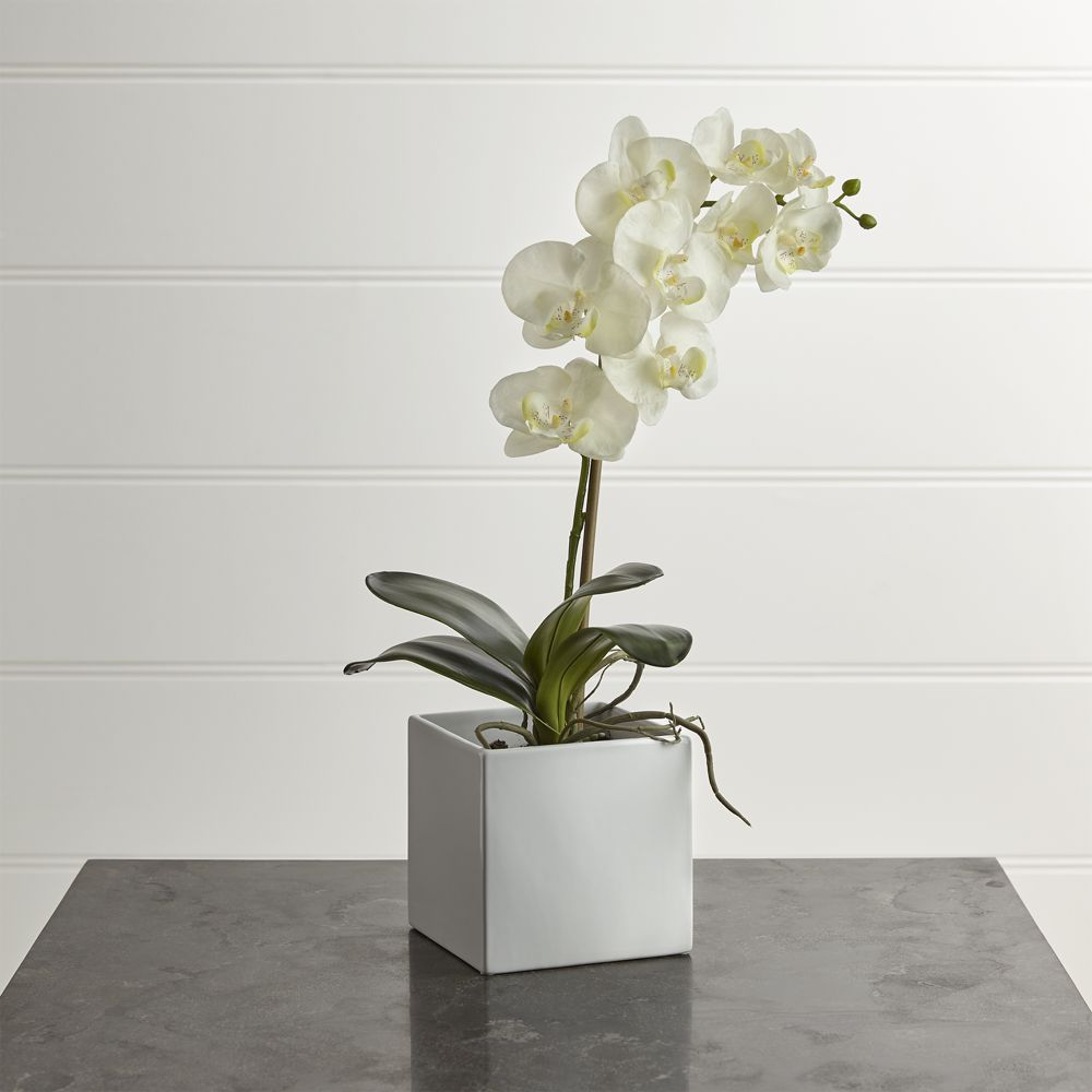 Large potted orchid plant crate and barrel
