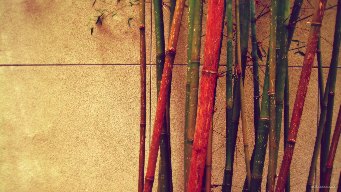 download colored bamboo hd wallpaper | zenitude | pinterest | hd