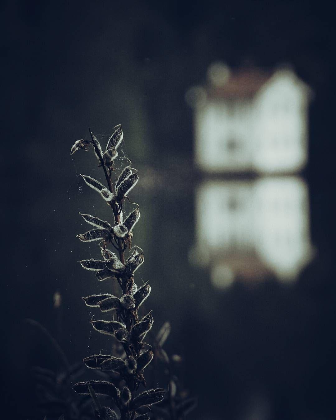Det gamla badhuset... fast på ett litet annat sätt. ❤ ◇◇◇◇◇◇◇◇◇◇◇◇◇◇◇◇◇◇◇◇◇◇◇◇◇◇◇◇◇◇◇◇◇◇◇◇◇◇◇ #visitsweden #ig_sweden #rsa_naturepics #Sweden #swedenimages #fingerprintofgod #instadalarna #royalsnappingartists #sombrescapes #igshotz #incredible_shot #artofvisuals #superb_photos #main_vision #moodygrams #agameoftones #vzcomood #ourplanetdaily #tv_allnature #4xn #tv_foggy #folkcreative #mist_vision #earth_shotz #wowplanet #ourmoodydays #igbest_shotz #aov #ig_masterpiece @instagram @instagood…