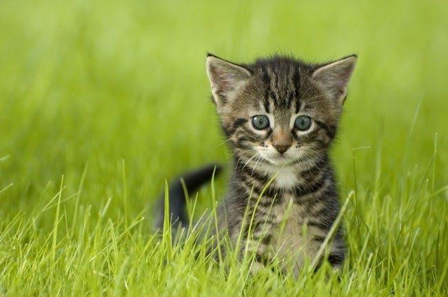 Nama Kucing Lucu Jantan