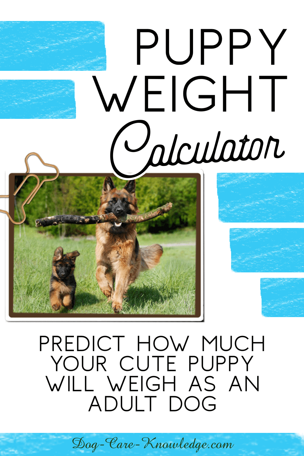 Puppy Weight Calculator How Big Will Your Dog Be Puppies Mixed Breed Puppies Dinmont Terrier