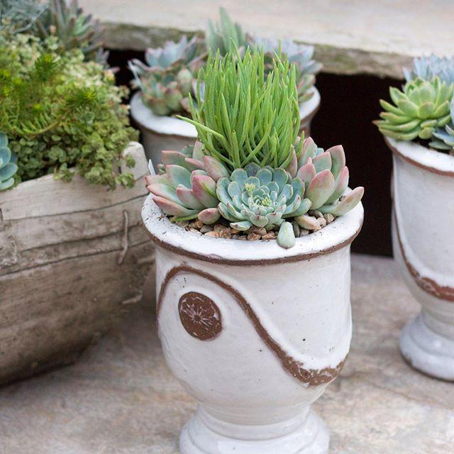 Such beauties! #rogersgardens #succulent #pots #beauty