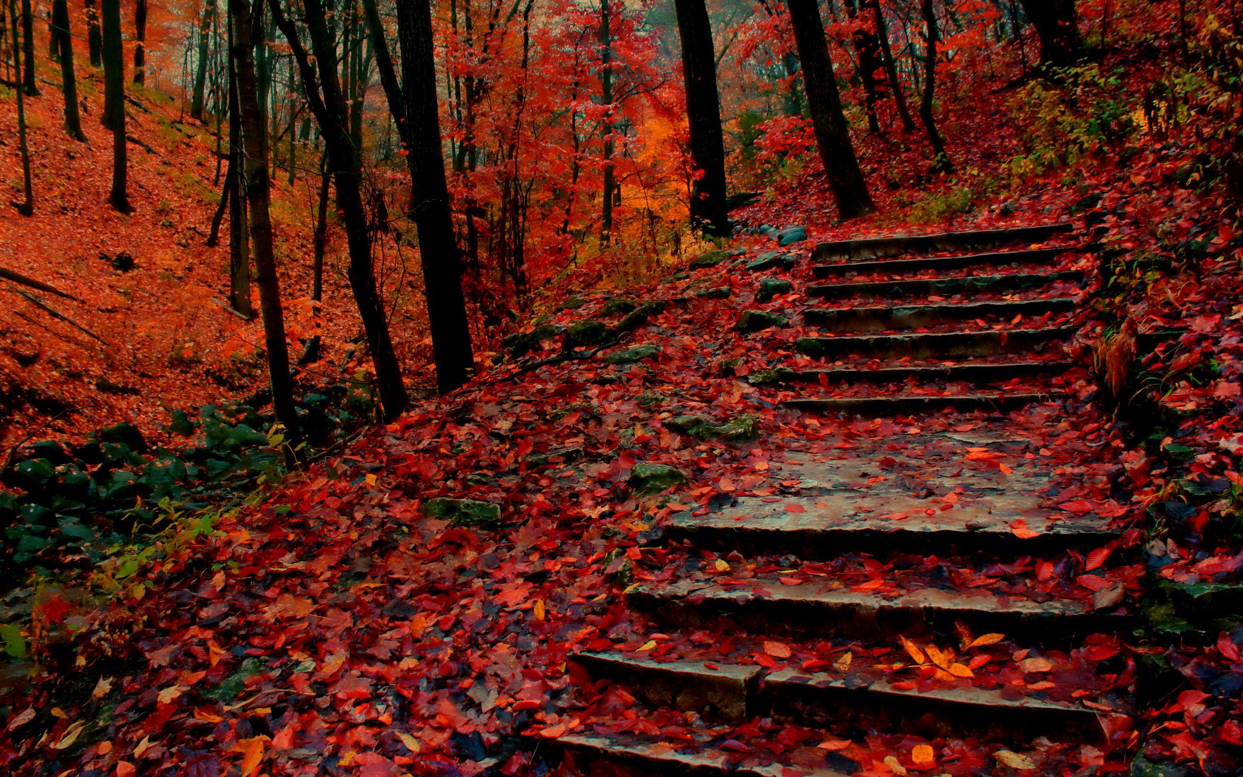 Leaves Resting On Steps HD desktop wallpaper Widescreen High