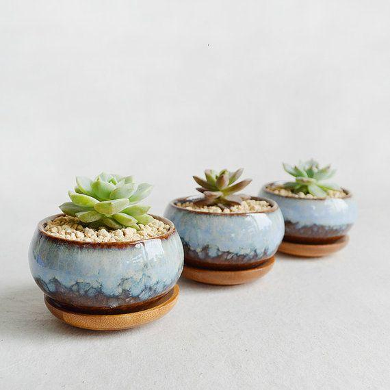 Glazed porcelain succulent planter cacti pot zen for Cactus in pots ideas
