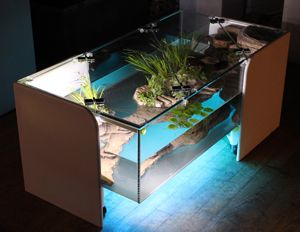 coffee table aquaterrarium // This is in a natural ego system ...