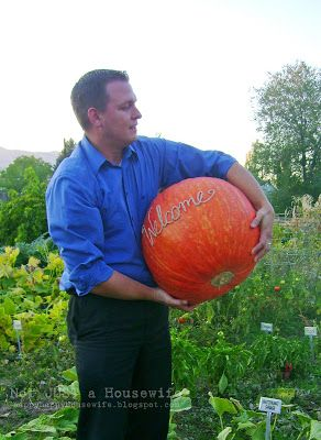 how to scratch your name into a pumpkin when its growing halloween - Growing Halloween Pumpkins
