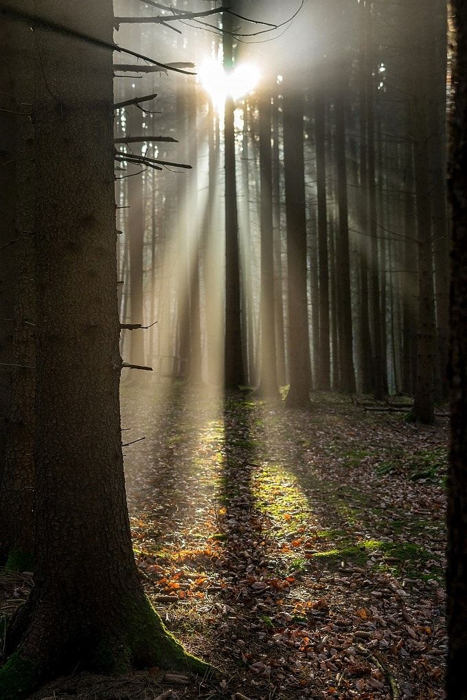 Enter The Light And Be Not Afraid For Those Who Seek Santuary Shall Not Be Turned Away Mel Forest Photography Forest Spirit Nature