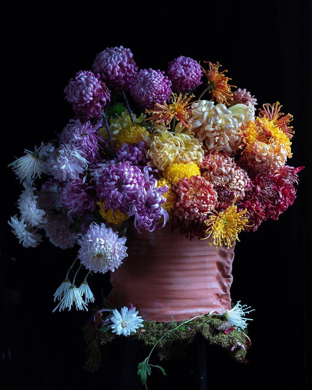 Frances Palmer On Instagram A Bit Of Ombre Before They All Fall Apart Chrysanthemum Garden Flowers Flowerstagram Terracotta Flowers Bloom Chrysanthemum