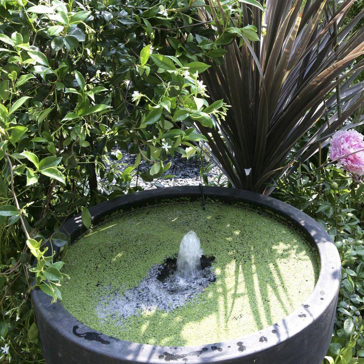 Tipps Gegen Algen Im Mini Teich Miniteich Wasserpflanzen Teich
