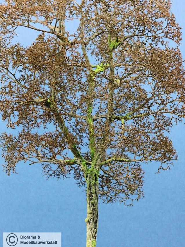 diorama zubehör modell bäume 1 buche ohne laub ca 25 cm