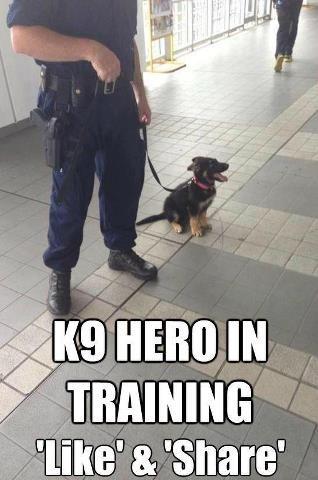 Coast Guard Dog In Training For Drug Interdiction Cute