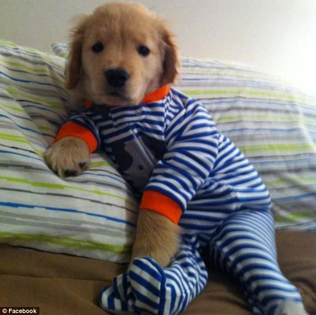 Must see Clothes Army Adorable Dog - 64a3d207d415c0ee4aeb8ab01469e69e  Graphic_721578  .jpg