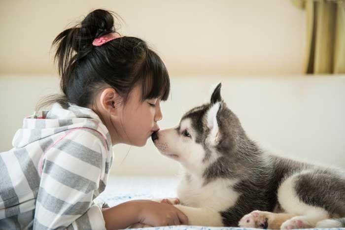 Study Finds Puppies, Ice Cream, New Toys Associated with Immediate Cessation of Pediatric Pseudoseizures - http://gomerblog.com/2016/06/pseudoseizure/?utm_source=PN&utm_campaign=DIRECT - #Pediatrics