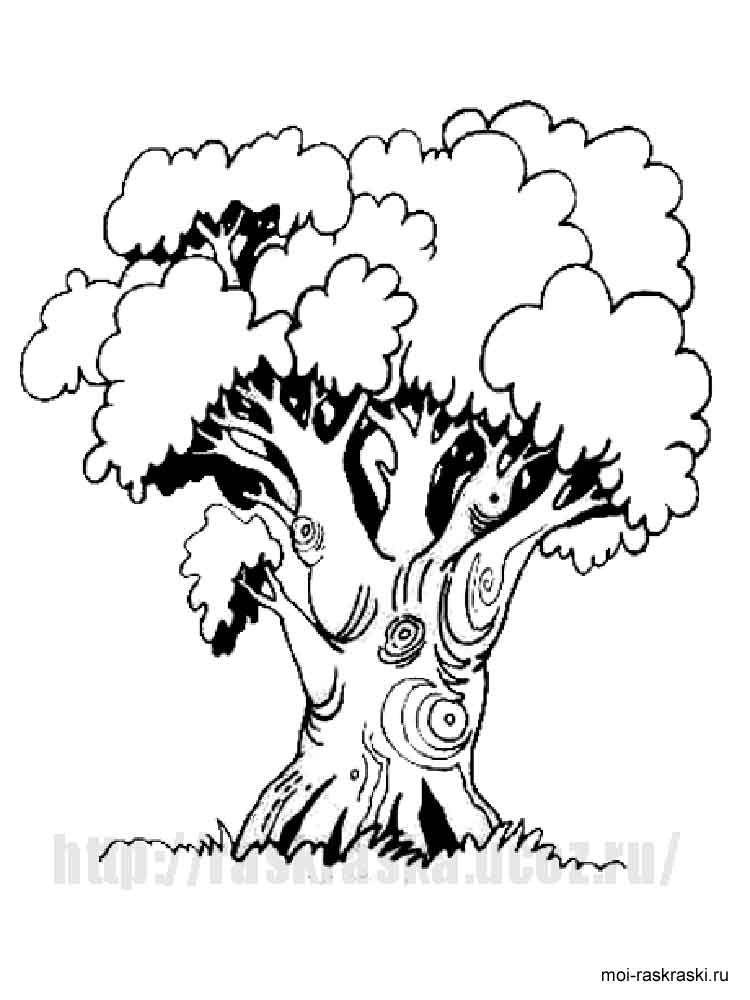 Картинки по запросу дуб раскраска