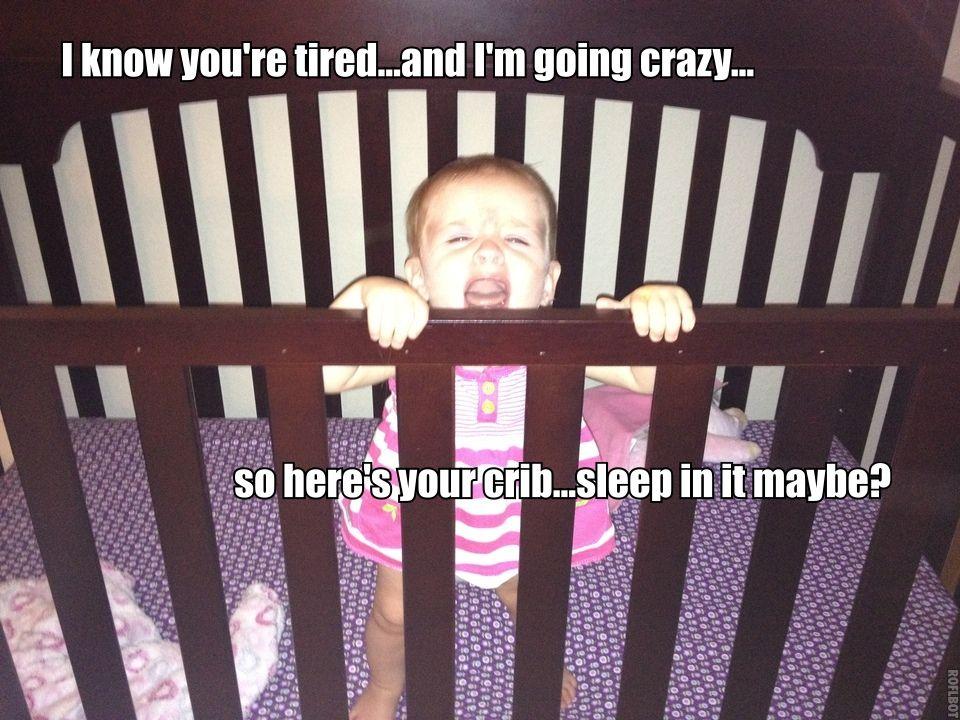 Kora has decided sleep is so overrated.