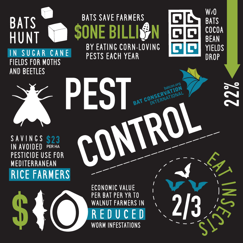 Did You Know Hungry Bats Help Feed Us Humans Many Insectivorous Bats Provide Pest Control For Farmers Check Out The Numbers Battytreats Batweek