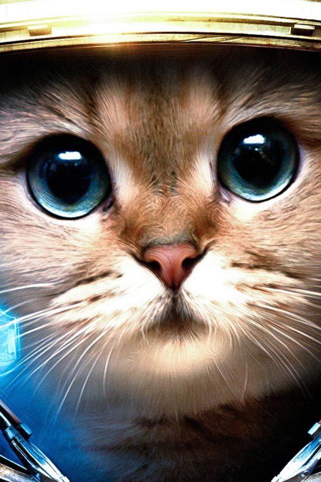 Space Cat Wallpaper For Iphone Desktop Long Wallpapers