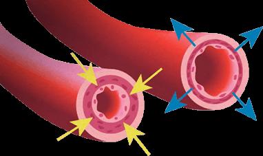 blodtryk i penis