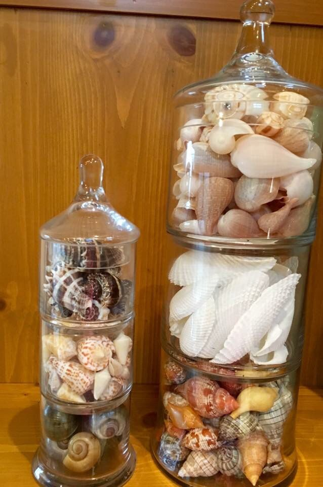 14+ Ideas for displaying seashells trends