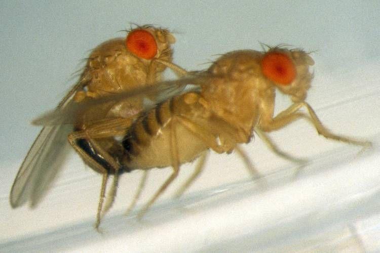 Fruchtfliegen Bekampfen Mit Hausmitteln Loswerden Fruchtfliegen Fruchtfliegenfalle Obstfliegen