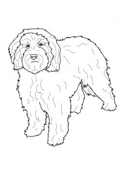 Cockapoo Coloring Page Cockapoo Coloring Page Super Coloring