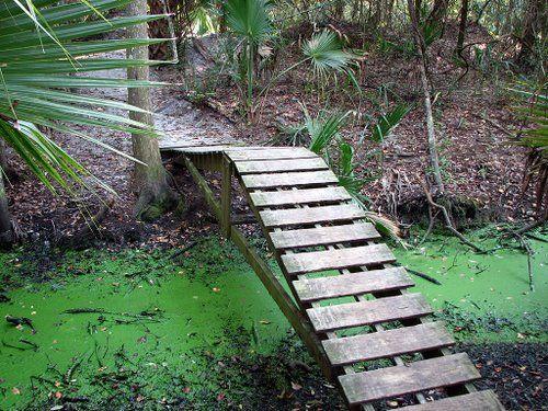 Bike Trail Bridge - Challenge