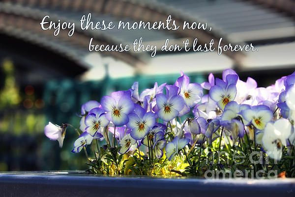 Purple Pansies And Life Quote By Nishanth Gopinathan Purple Pansy Pansies Pansy Quotes