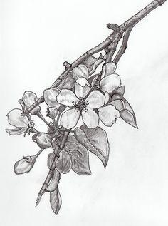Pin De Ina Mackliff En Tattoo Tatuaje De Jazmin Jazmin Flor Dibujo De Arbol