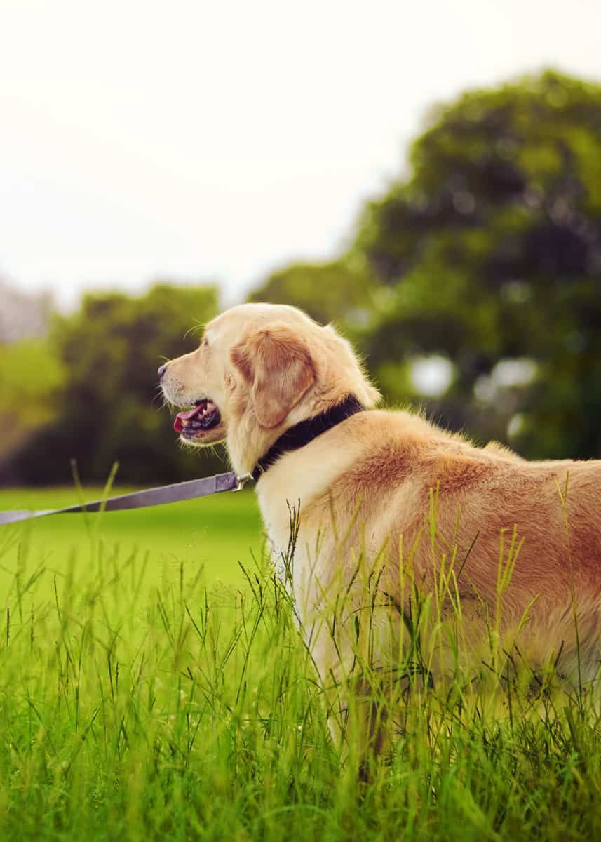 5 ways to remove a tick head that broke off humans dogs