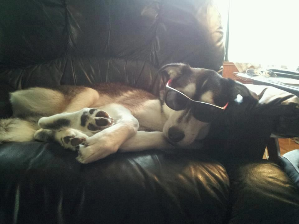 Shared by Meagen Hensley - My dog is cooler than yours