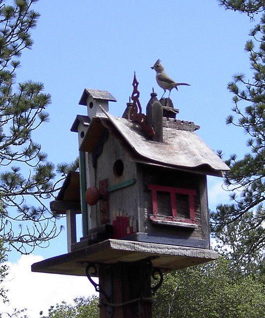 Titmouse-on-birdhouse by scruzia, via Flickr