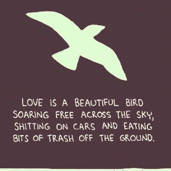 Merveilleux Love Bird Quotes And Sayings Quotesgram Quotes About Love Birds Quotes  About Love Birds