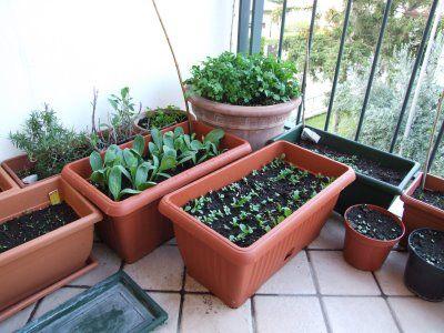 Orto sul balcone o sul terrazzo-diversi tipi di vasi | salute ...