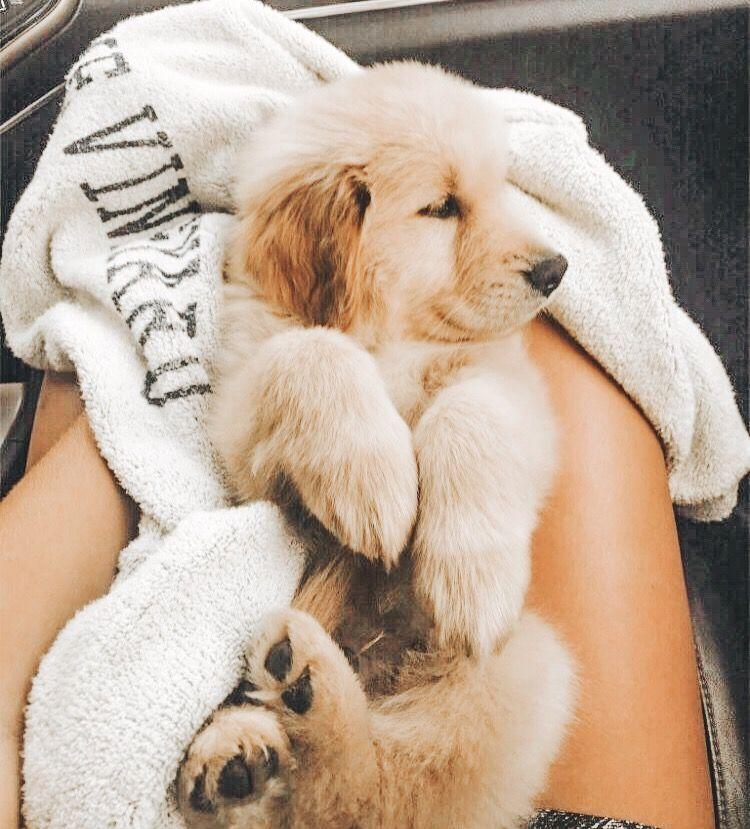 𝚙𝚒𝚗𝚝𝚎𝚛𝚎𝚜𝚝 emerald sue 🐾 Cute puppies, Cute dogs, Cute