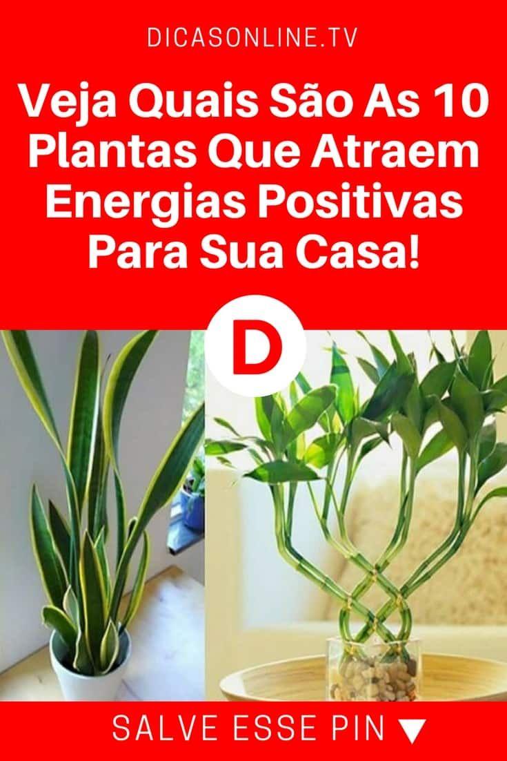 Atrair Boas Energias Veja Quais Sao As 10 Plantas Que Atraem