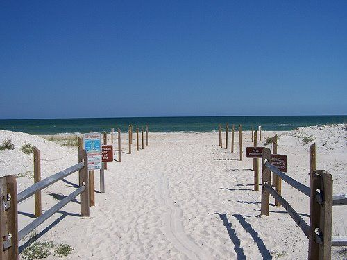 Picture of quiet empty beach at St George Island State Park in Florida Beautiful trail to white sand beach paradise at St George Island Stat...