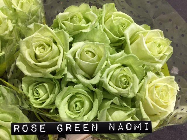 #Rose #Rosa #GreenNaomi; Available at www.barendsen.nl